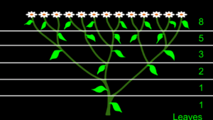 Leaf growth